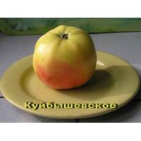 Яблоня Куйбышевское