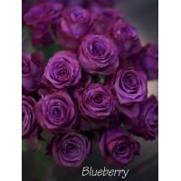 Роза Блуберри(чайно-гибридная)